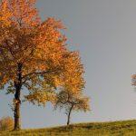 Monte Grappa, i colori dell'autunno